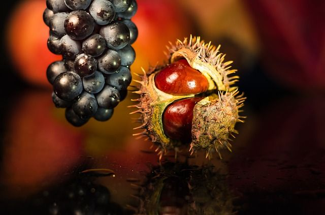 Gesztenye zöldség vagy gyümölcs